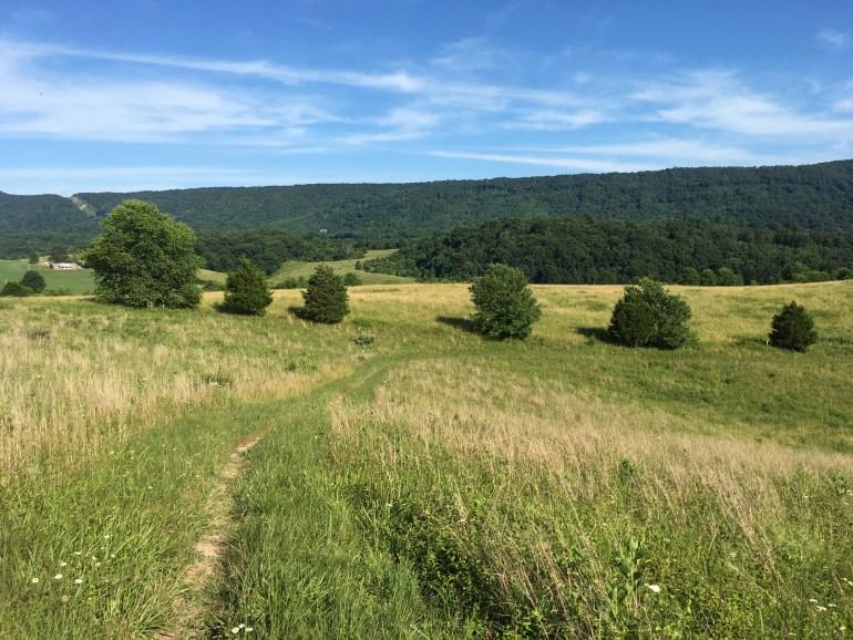 A narrow trail weaving through a grassy meadow on a mountain top