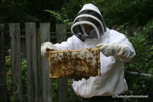 Lil' Suburban Homestead bee keeping-  Space Coast Preppers.com