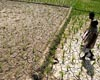 india-farm-drought-2009-afp-sm.jpg