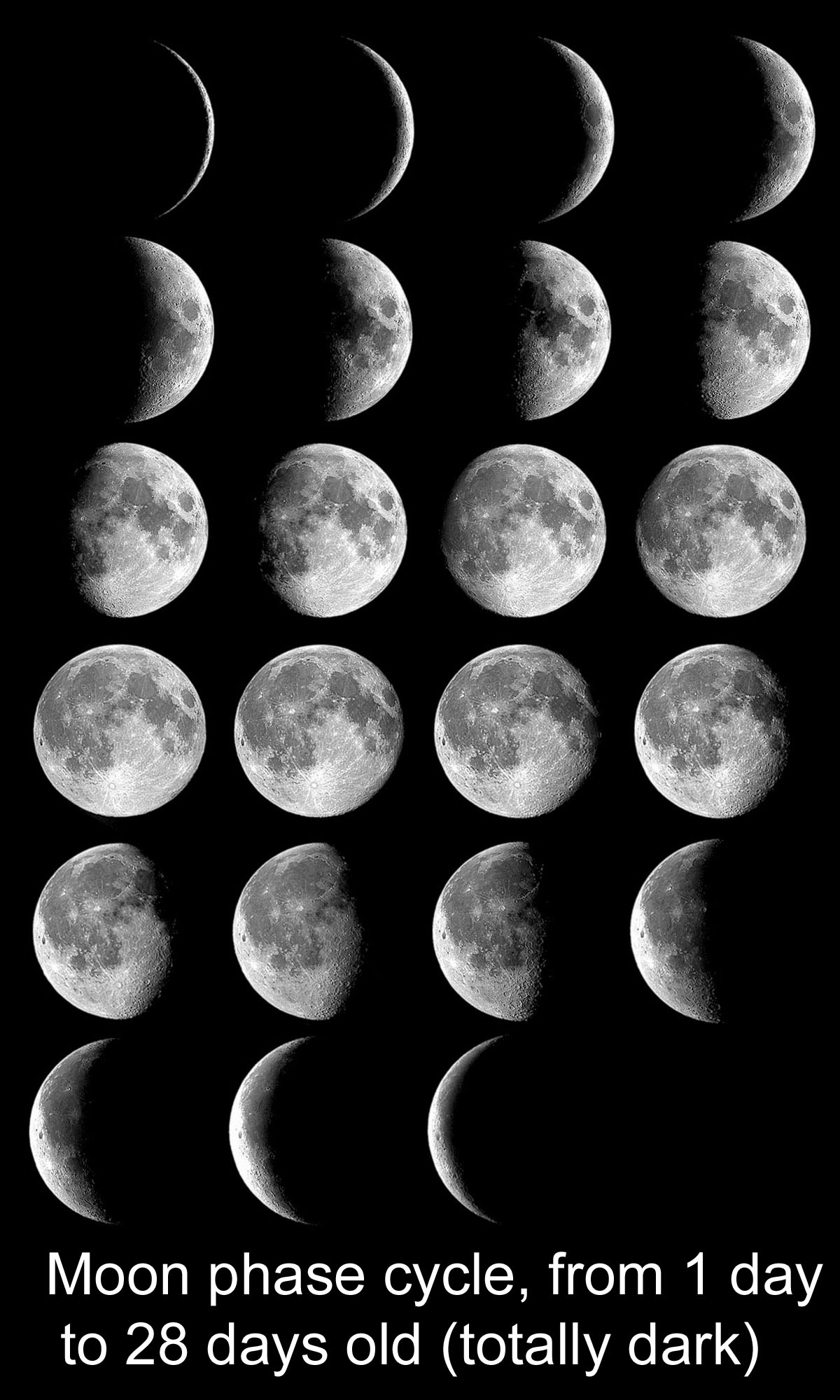 The Moon S Phases In Oreos