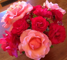 my roses