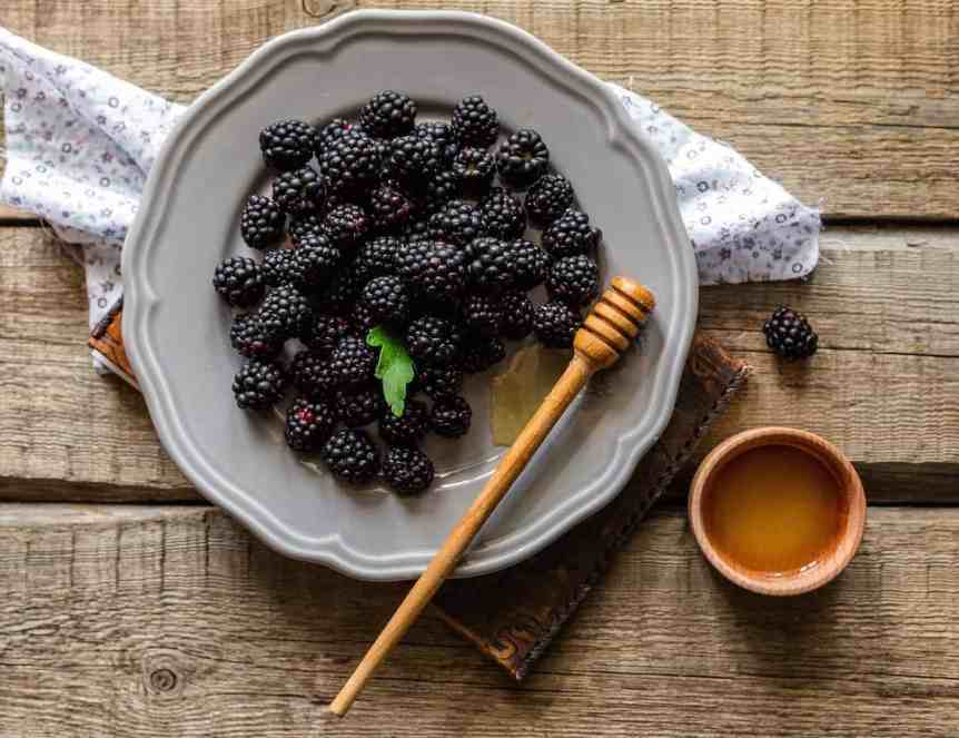 September Equinox - Michaelmas Blackberries