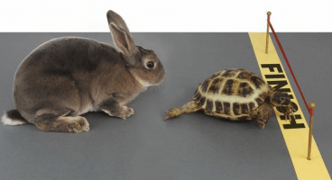 Tortoise Acquisition Corp. Files for $225M SPAC IPO