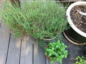 Thyme and mint