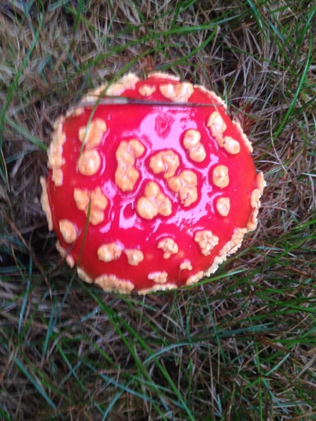 Northcoast mushroom