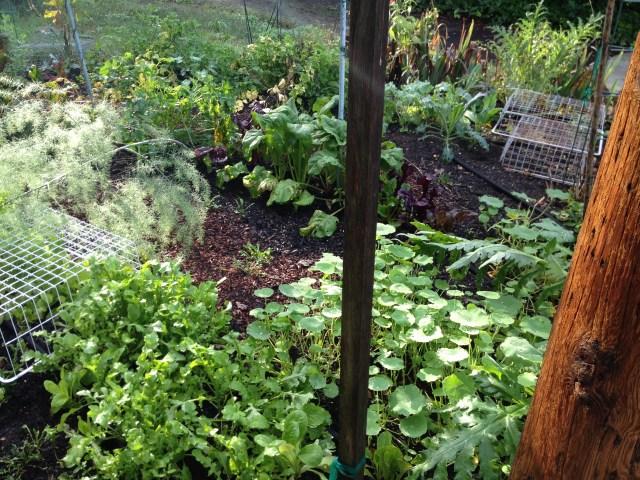 Oakland garden