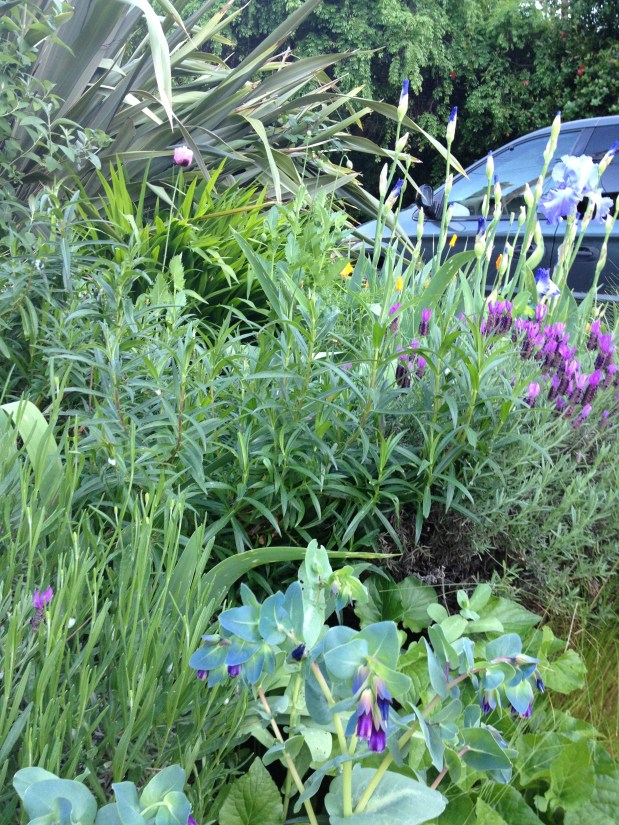 July – In the Garden