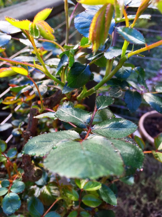 February in the Garden – Spring in Northern California
