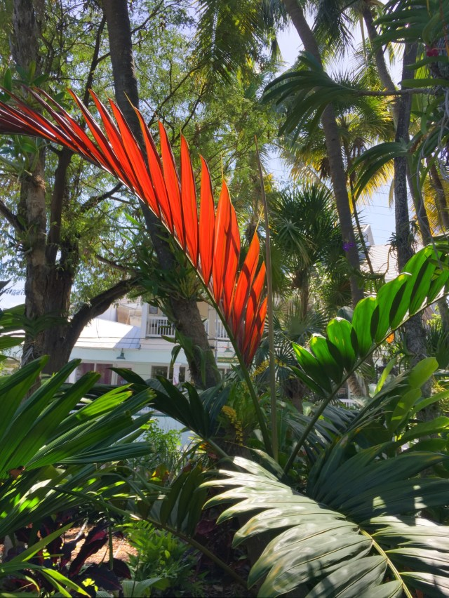 Flame Palm