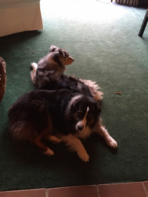 Casey, Quinn and awful green carpet, magnet for dog hair
