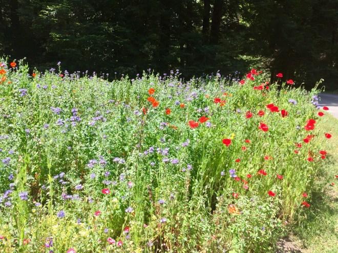 Pollinator Garden May 2019