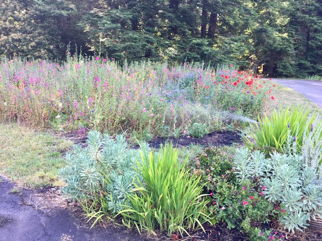Wild Flower Meadow, Fort Bragg CA