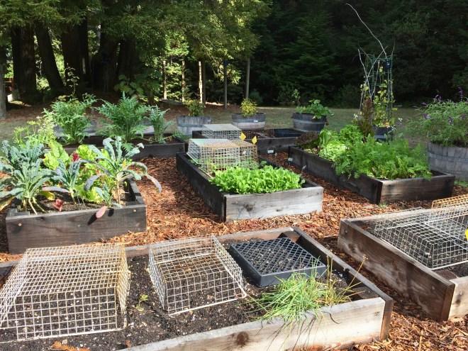 Raised bed vegetable garden - Fort Bragg, CA