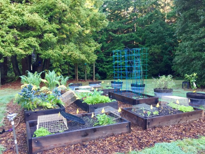 Fort Bragg Vegetable Garden December 2019