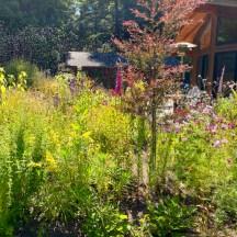 July Back Garden
