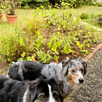 Back Garden - Casey and Quinn