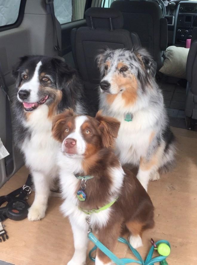 Casey, Quinn and Olllie...ready for a walk