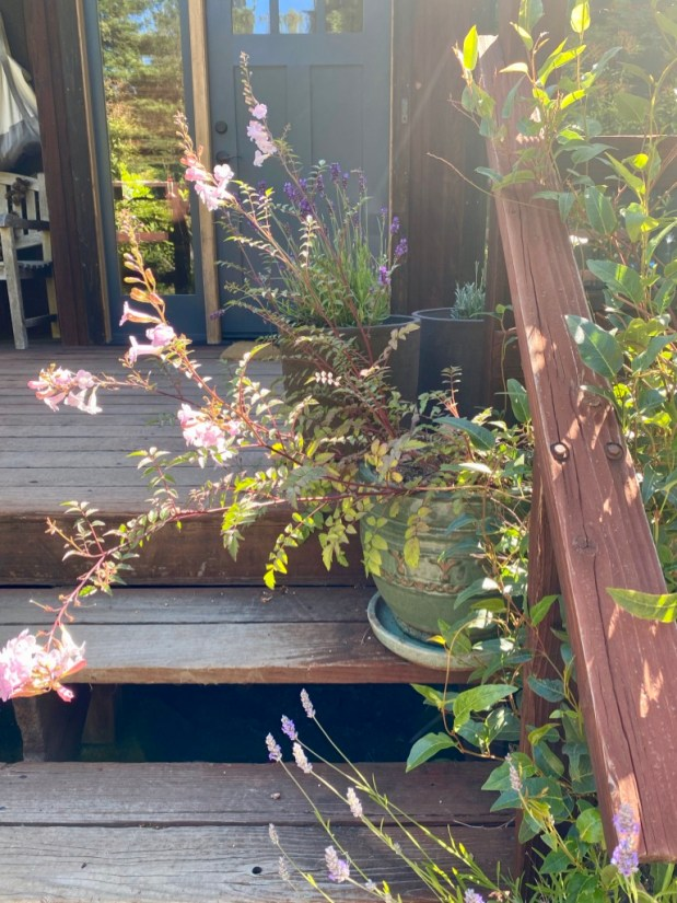 In My Garden – July 2021