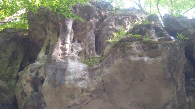 pechera-grot-pruima