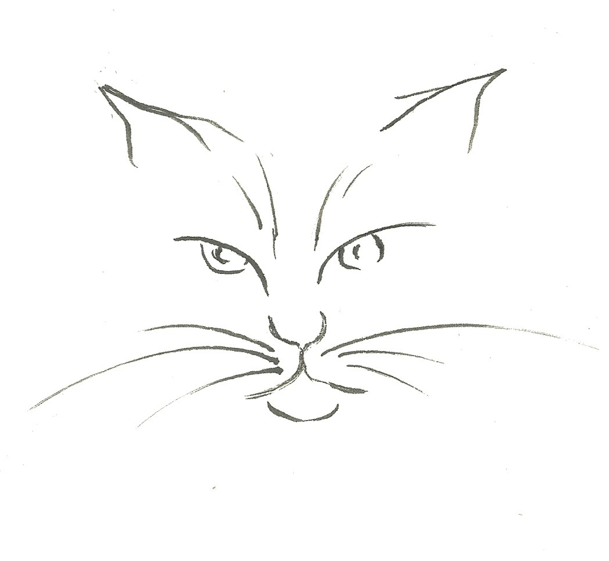 drawing of a cat face