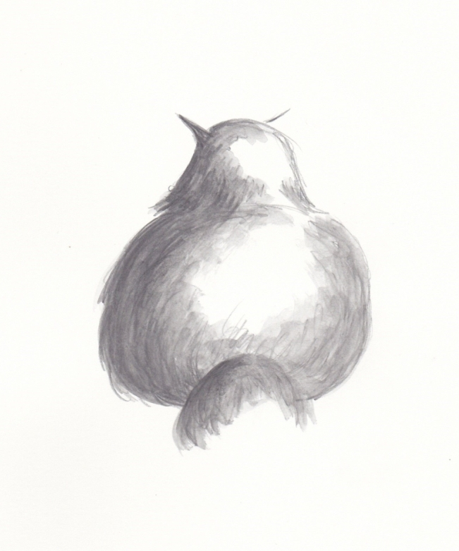 drawing of a cat posterior
