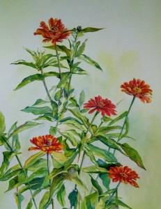 bright red zinnias