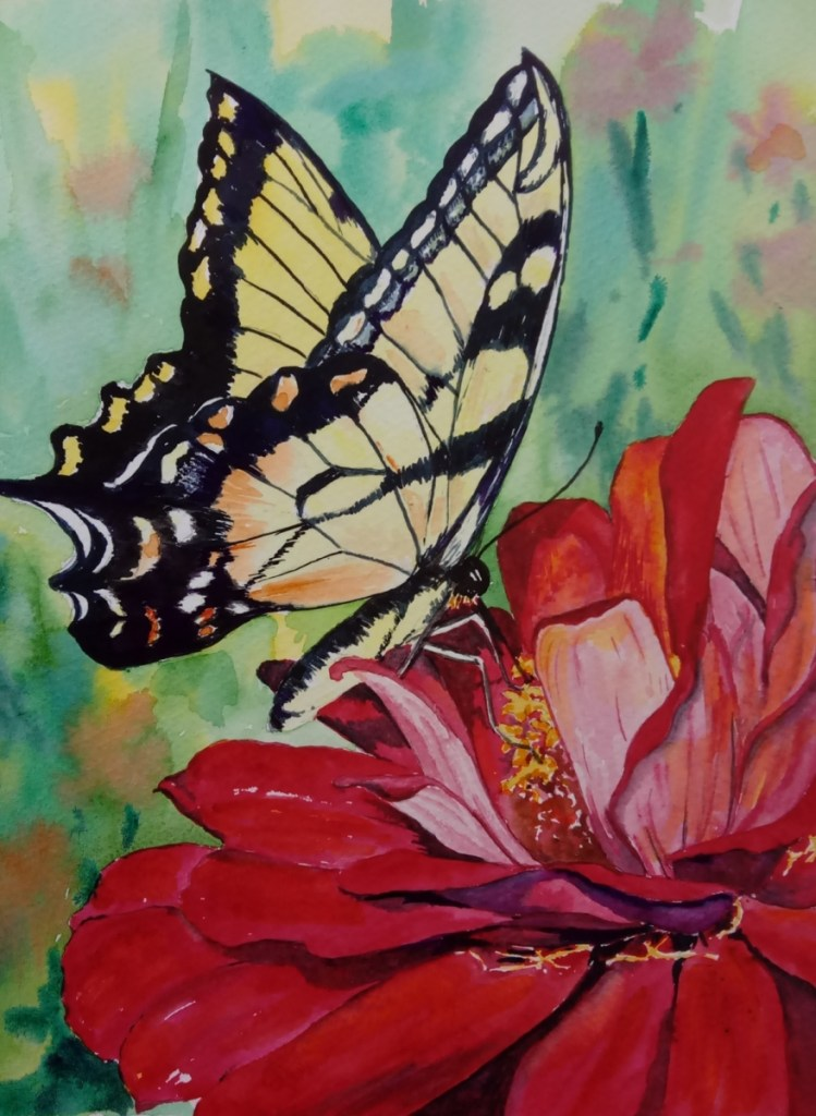 watercolor of butterfly on a zinnia