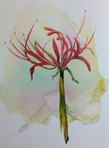 """single red spider lily 8x6"""" watercolor on yupo image $175"""