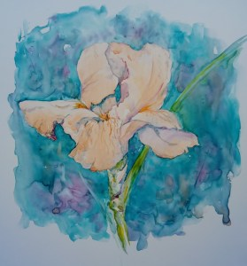 peach colored iris