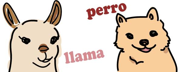 スペイン語 リャマ 犬 発音