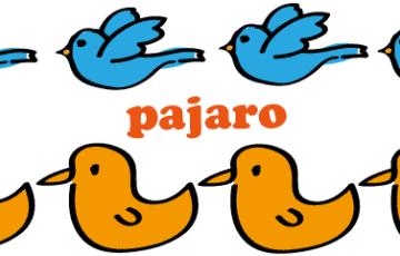 スペイン語 鳥 pajaro