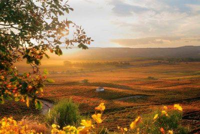 paisajes_los_viñedos_de_la_rioja