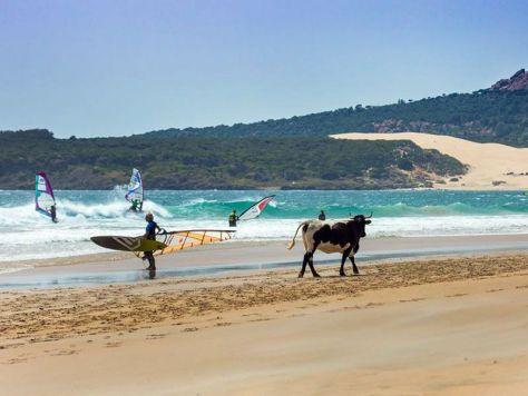 bolonia beach in cadiz
