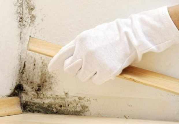 mucegai-curatare