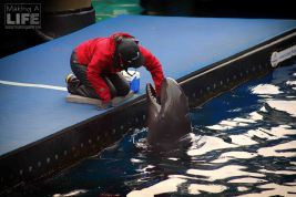 vanaqua_dolphin_making-a-life-8