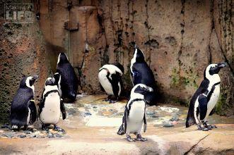 vanaqua_penguin_making-a-life-2