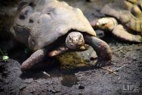 vanaqua_turtles_making-a-life
