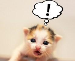子猫びっくり顔