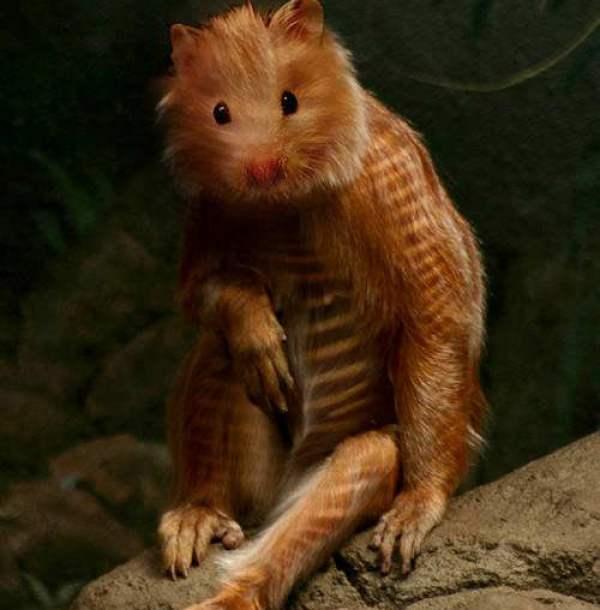 animale-ciudate-13