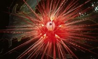 Red-Sea-Urchin