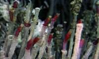 tumbleworms