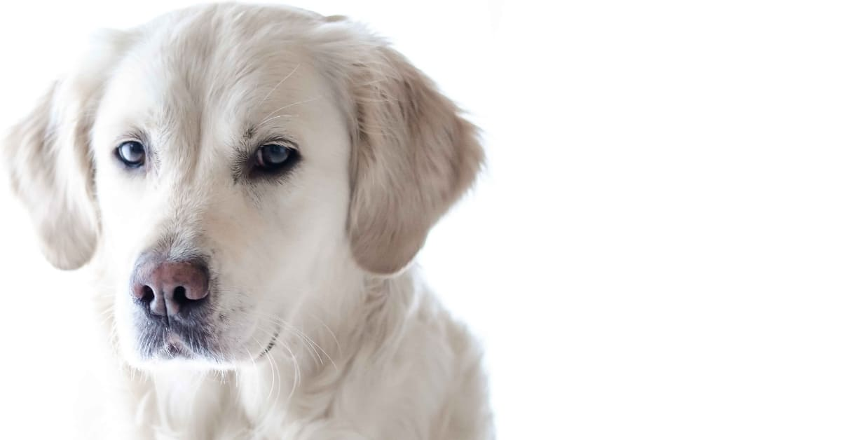 Best Dog Brush for Double Coat