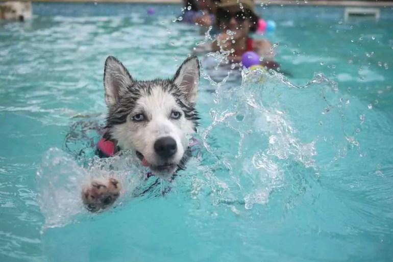 do dogs sweat