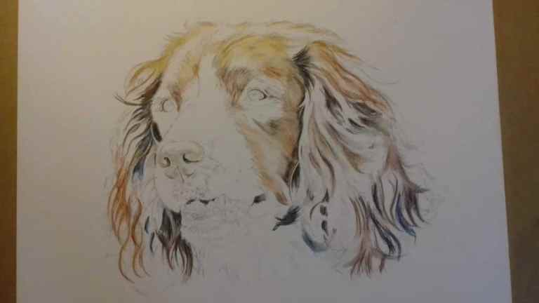 how-to-draw-a-dog-step-by-step