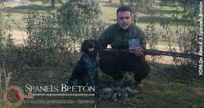 DeAbelK3-Spaniels- Bretón-YOM-cobro en puesto fijo