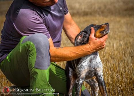 DeAbelK3-Brayan-breton-spaniel-tricolor-cachorro-epagneul-IMG_0902IMG_0962