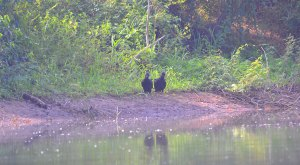 spanish-creek-belize-photo-9