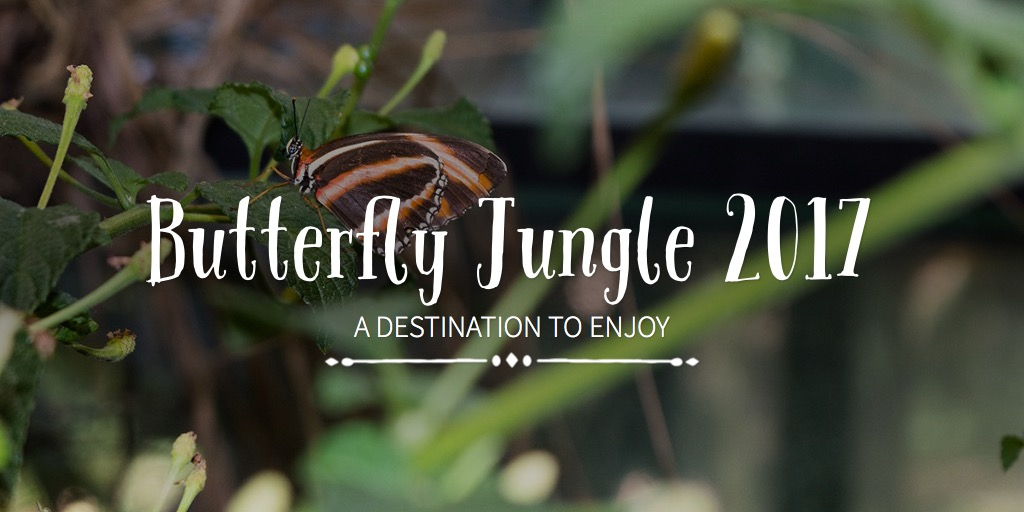 Butterfly Jungle 2017