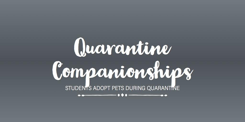 Quarantine Companionships