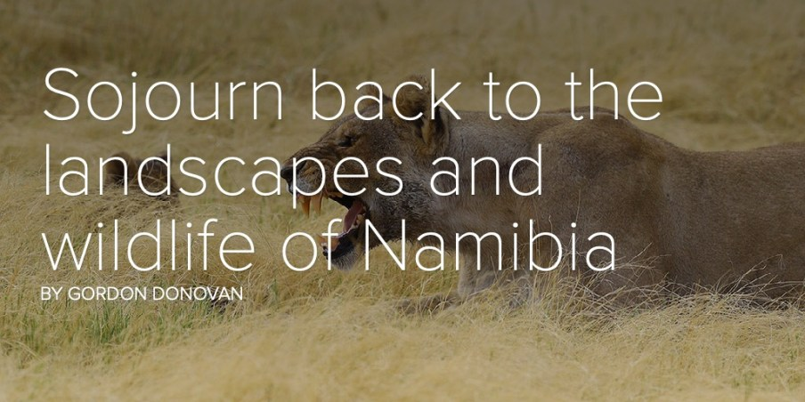 Sojourn back to the landscapes and wildlife of Namibia